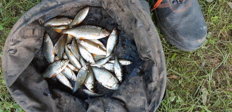 Pêche en petit étang à Santeny (94) 15 06 2018