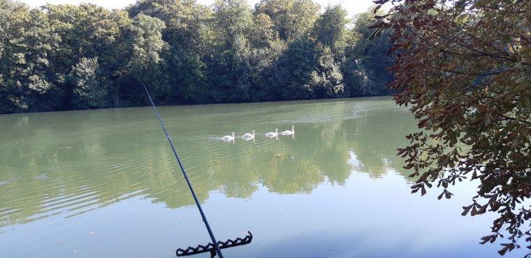 Retour en Seine au feeder le 27 09 18