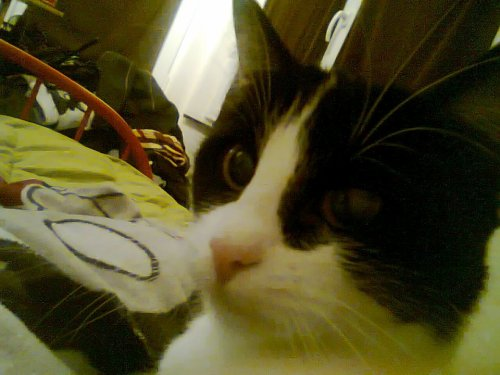 Ma petite Félicita <3 Sale peste ce chat, comme sa maman ^^