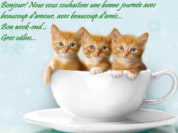 """Résultat de recherche d'images pour """"bon week end chat"""""""