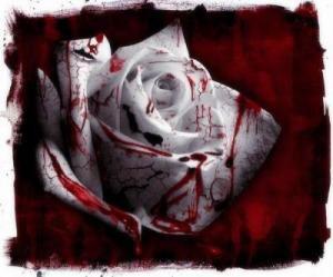 Jardin de rose