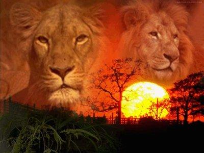 la puissance du Lion.