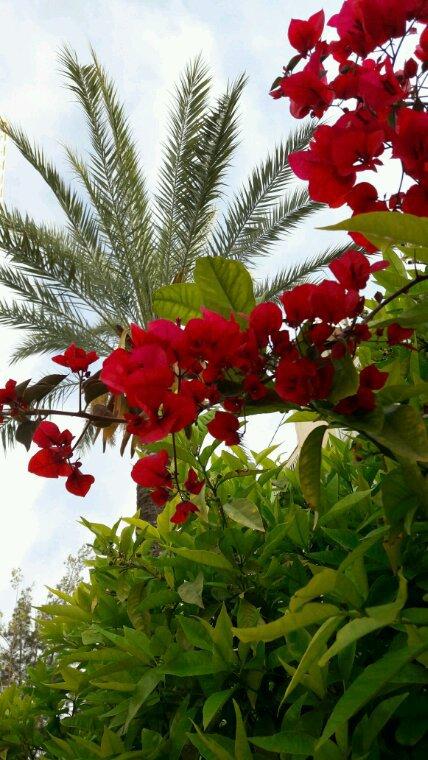 Quelques fleurs d Espagne