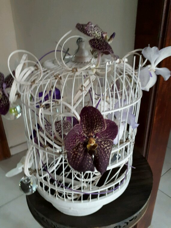 La cage aux orchidées chez Françoise Vandonink