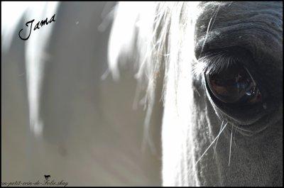 Regarder L'oeil D'un Cheval C'est Comme Si il Nous Ouvrait Son Coeur.