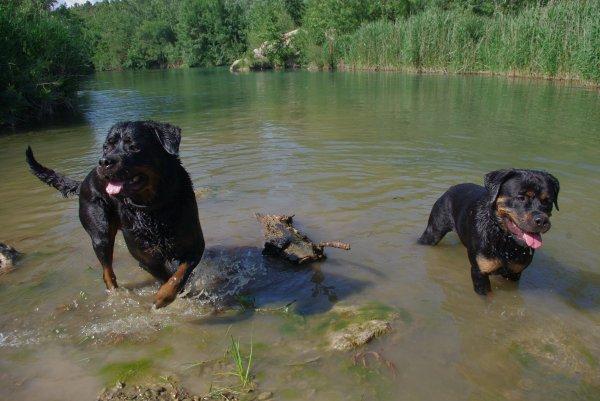 ~ A la rivière avec la copine ENNA DES CORBIERES SALEES ~