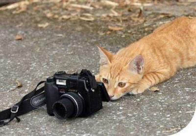 voici un chatographe en plein job