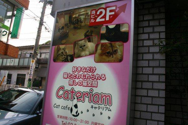"""Le """"Neko Café""""et  un café entièrement dédiés aux """"neko"""" c'est à dire les chats,"""