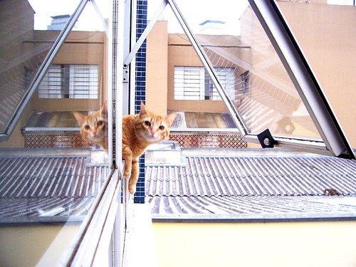 Un chat devant la justice italienne pour voyeurisme le 16 fevrier 2011 17h 23 min  AFP