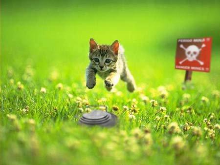 ***Etats-Unis:  Un chat californien :kleptomane pris la patte dans le sac après le vol de 600 objets****