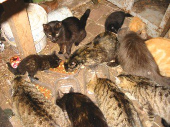 :$ Sydney impose un couvre-feu... aux chats :-#