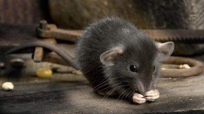 A Hong Kong, une souris empêche un avion de décoller depuis mardi soir mieux que le 11 septembre