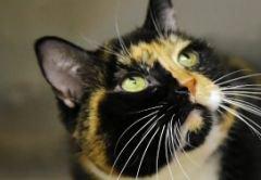 Un chat perdu dans le Colorado il y a cinq ans a retrouvé sa famille à New York, à plus de 2.500 kilomètres de son point de départ,