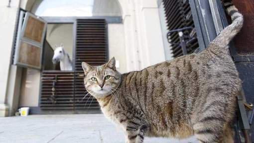 """**Autriche: un premier """"café à chats"""" ouvre ses portes à Vienne**"""