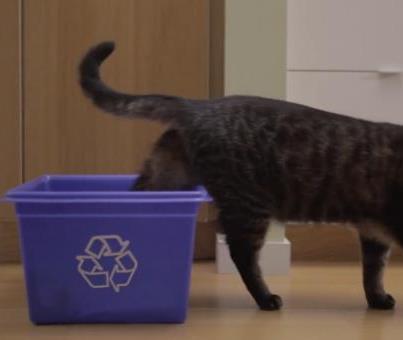 Norman, le chat eco-warrior de WWF