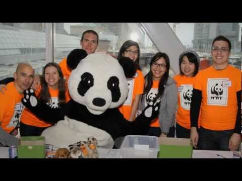 Norman, le chat eco-warrior de WWF