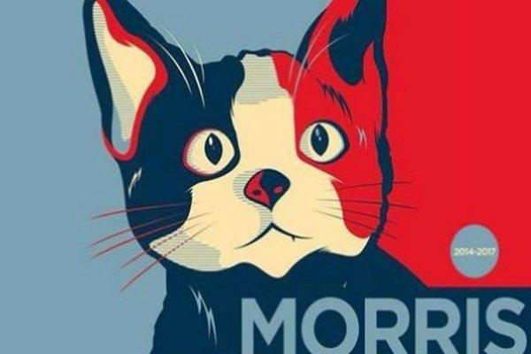 Morris, un chat  est candidat à la mairie de Xalapa, ville de 450.000 habitants située au Mexique.