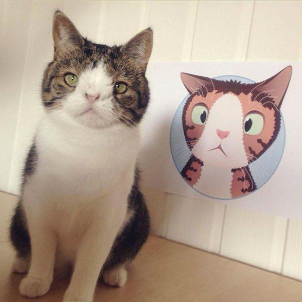 Rencontrez Monty, un adorable chat qui a la particularité de ne pas avoir d'os dans le nez