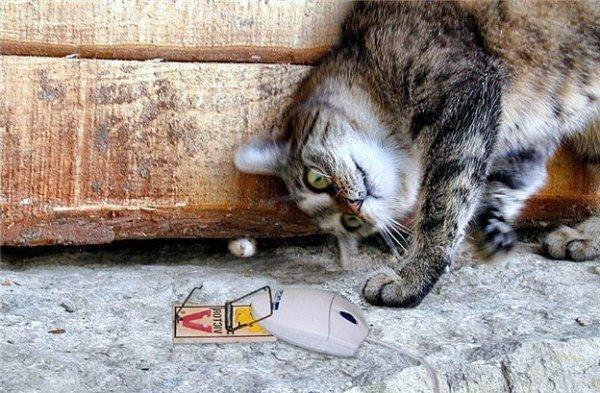 Des chats anti-stress en entreprise ? Ça se passe au Japon