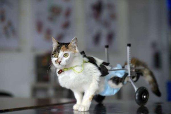 Animaux bioniques : la technologie ne sauve pas que les hommes