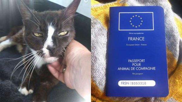 Un chat disparu à Londres réapparaît 8 ans plus tard... à Paris