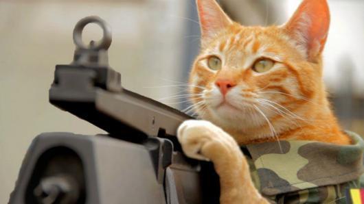 Votre chat est prêt à vous tuer, selon la science