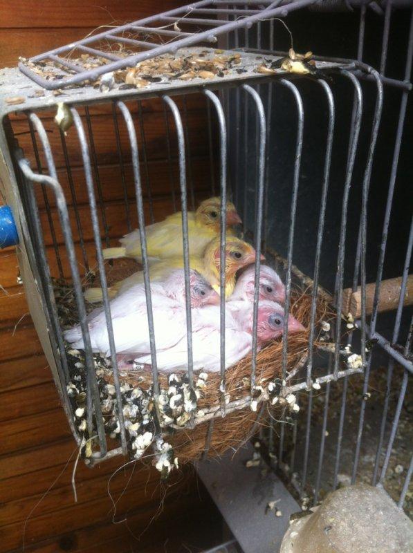 Un beau nid de Raza ....