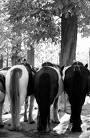 Photo de equitation-matos44