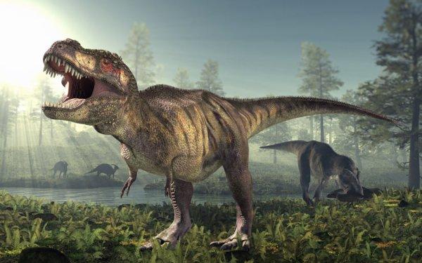 Tyrannosaurus-Rex