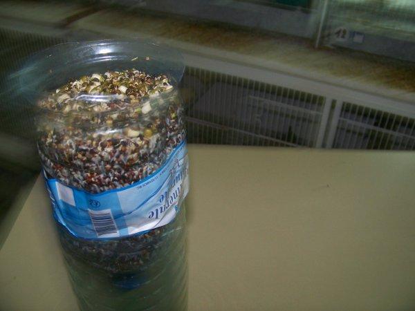 Mes graines germées
