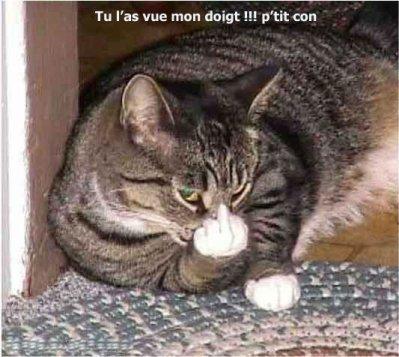 Image De Chat Rigolo trop rigolo le chat - spiderman