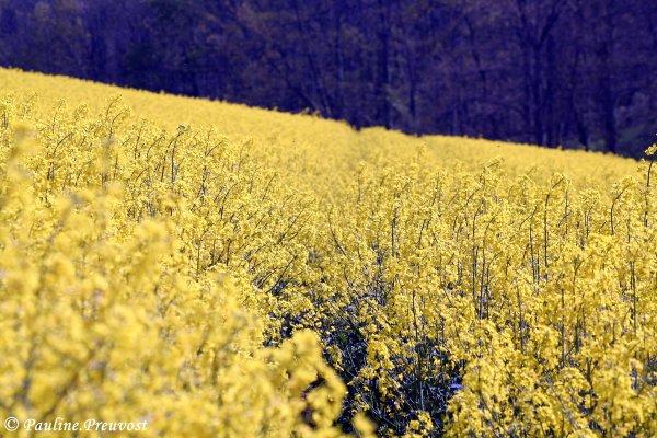 [ Le jaune signifie la joie de vivre. ]