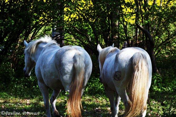 Equins. (L)