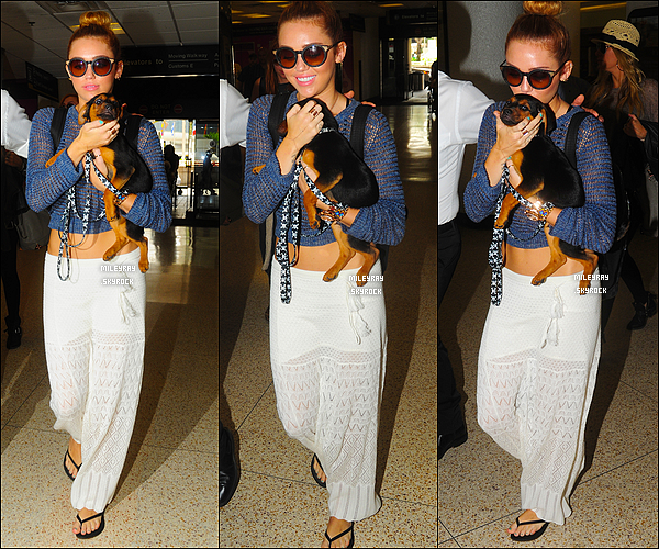 18 mai 2012 ♦ Miley et son petit chien Happy à l'aéroport de Miami, puis à l'aéroport de L.A. Top ou flop ?
