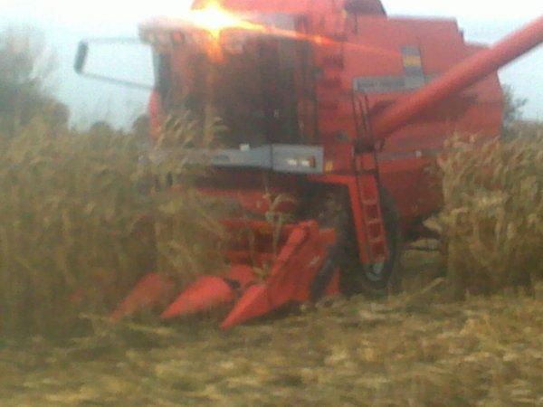 maiis grains