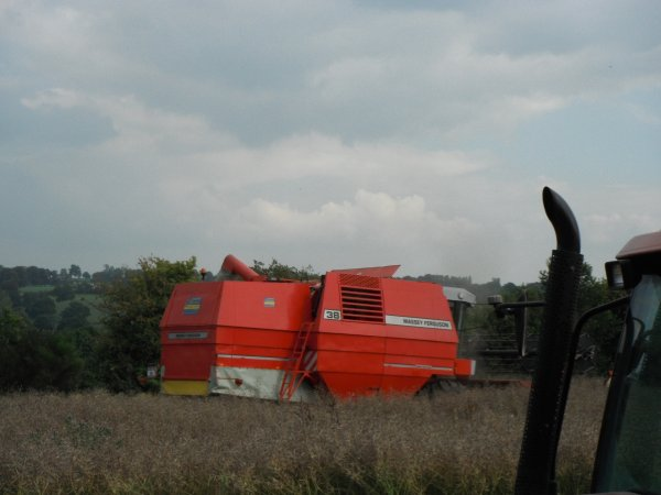 colza 2011