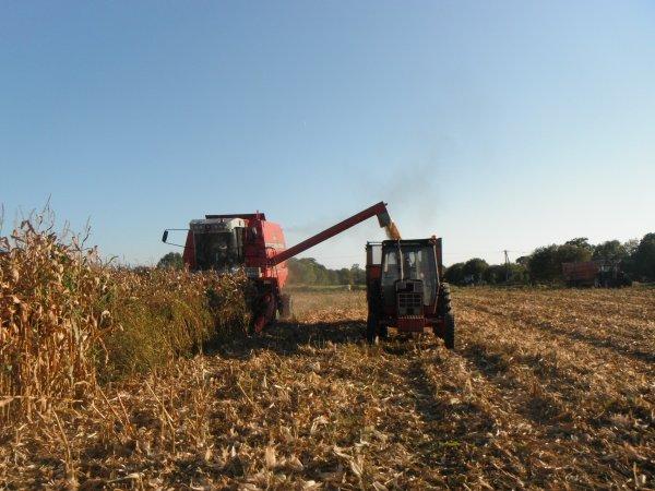 maiis grain 2011 ( dimanche 2 octobre )