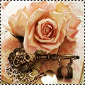 Pack 7 : rose