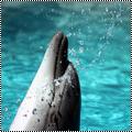 Pack 15 : dauphin