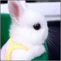 Pack 19 : lapin