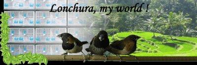 Forum dédié aux Lonchuras ( capucins ).