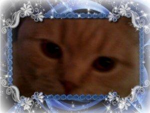 mes cat s