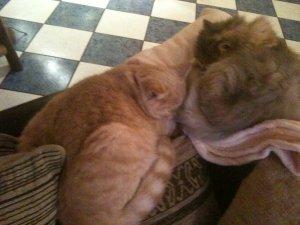 mes deux femelles qui se tienne chaud