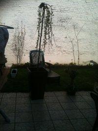 mon jardin qui reprend vie
