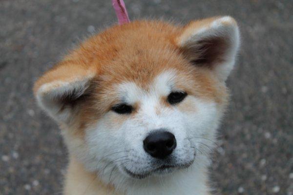 Petite Tenshi d'amour <3 la copine à Diego, elle n'à que 4 mois. Bientot en expo avec moi ^^ et son maitre !