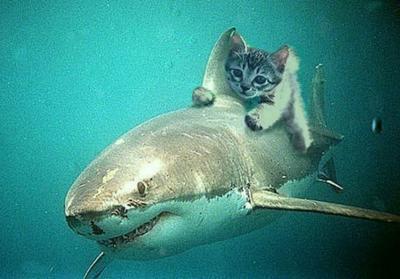 Troo rigolo le chat avec le requin biienvenu - Requin rigolo ...