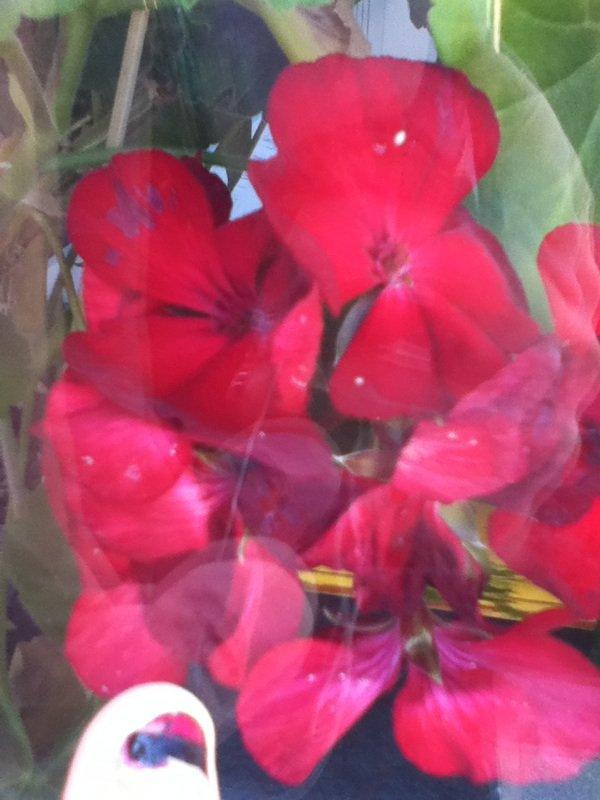 une fleure
