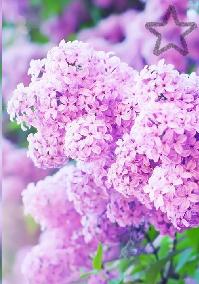 Pack fleurs