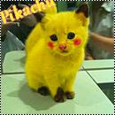 Pack pokemon
