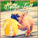 Pack tout pour un blog --> automne
